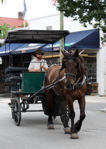 Carriage and Horse in Downtown Charleston