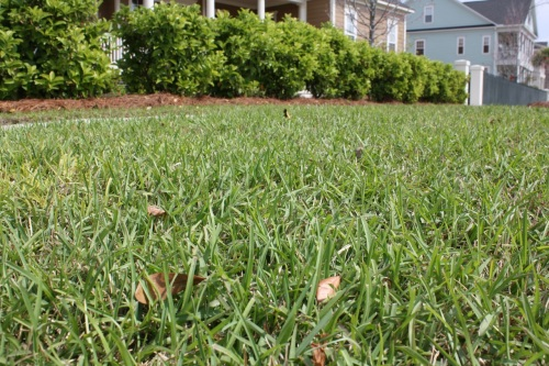 Green Grass - Spring - Alesya Bags